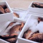 Термоящики для рыбной продукции