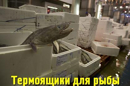 Термоящики для рыбы